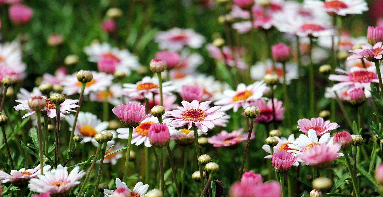 Piękny ogród nie wymaga stosowania szkodliwej dla ludzkiego zdrowia chemii ogrodowej